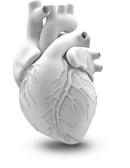 CGI rendering of a heart